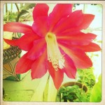 Pink Flower by Sara Ferguson
