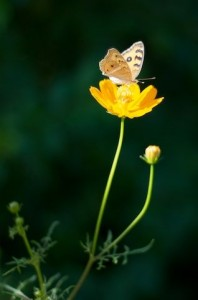 flower and butterfly by jonicdao