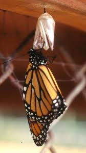 Monarch Magic of Transformation